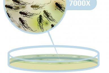 Het kweken van de Escherichia coli op een voedingsbodem