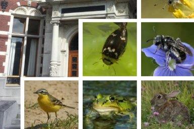 Beschermde fauna en flora binnenstad