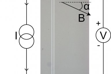 Figuur 2: Microscoopbeeld