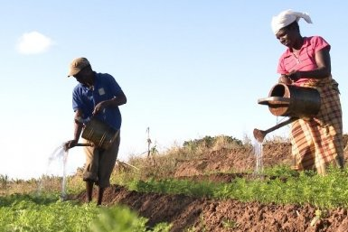 Food sovereignty in the making - Bucket irrigation Mozambique