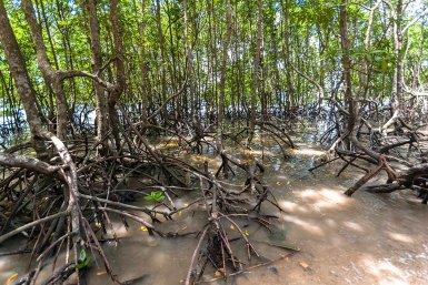 Mangrove Future Deltas