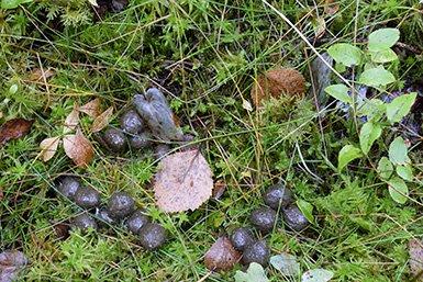 Door konijnenmest zal rode klaver minder woekeren, waardoor de biodiversiteit stijgt. Beeld: iStock.com/LOJ5407