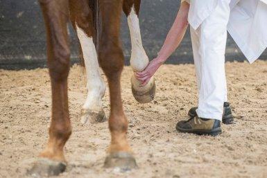 Diergeneeskunde - artrose paard