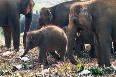 Aziatische olifanten, moeder en kind