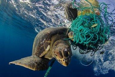 Schildpad verstrikt in plastic foto Jonathan Green