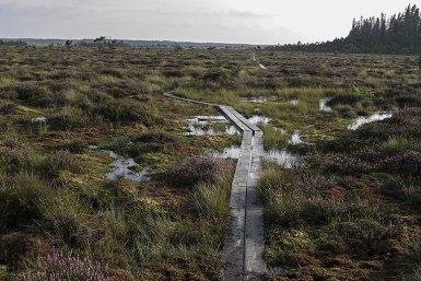 Hoogveen, foto Cornelia Mattiasson