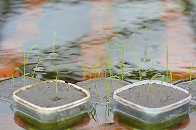 Toulotte rice experiment
