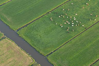 Luchtfoto van weiland met koeien en slootjes.
