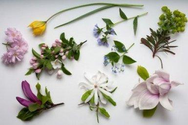 verschillende planten