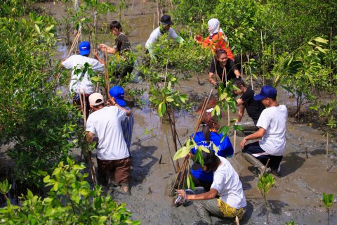 People plant young tree in deep mud in mangrove reforestation project