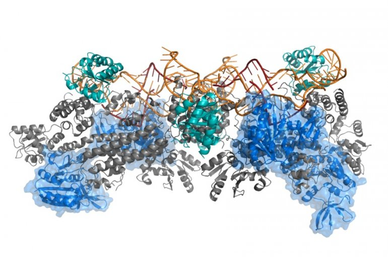 complex protein structure calculated with the M3 Framework