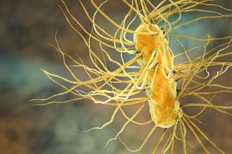 De Escherichia coli