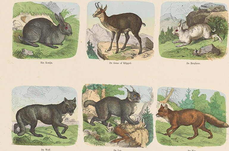 Wilde dieren, Hermann van der Moolen, 1843 - ca. 1920