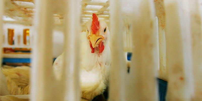 Bio-ethiek © iStockphoto.com/EdStock